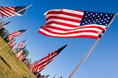 American Flag Display In Honor Of Veterans Day poster