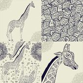 Постер, плакат: Beautiful adult Giraffe Hand drawn Illustration of ornamental giraffe isolated giraffe on white ba