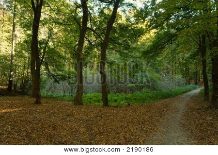Green Fall Wood With Footpath