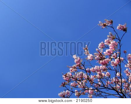 Pink Branches