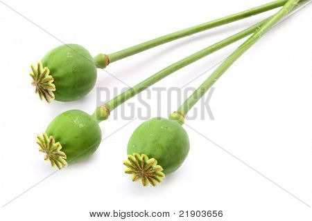 Three opium poppyhead isolated on a white background.