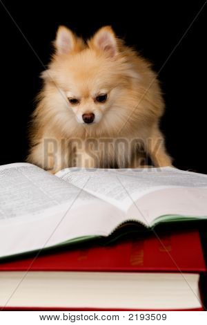 Puppy Prodige