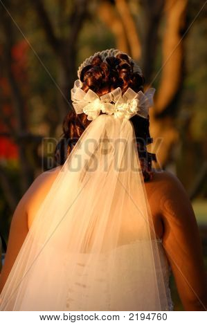 Wedding Vail