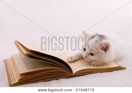 Kitten On Book