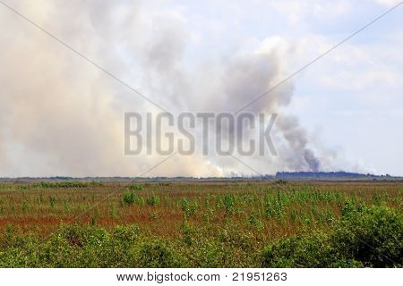 Everglades Brush Fire