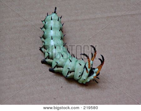 Horned Worm