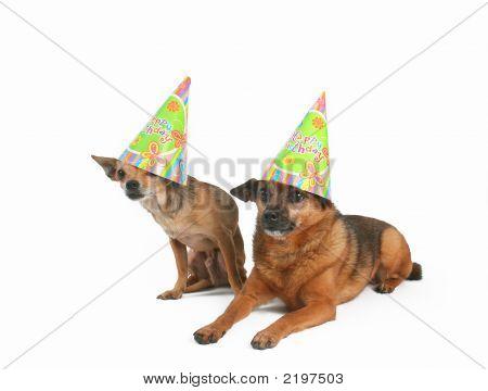 Happy Dogday
