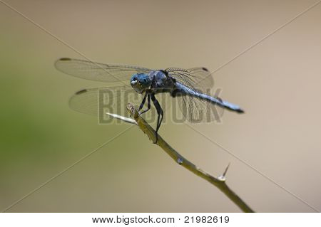 Dragonfly on branch portrait
