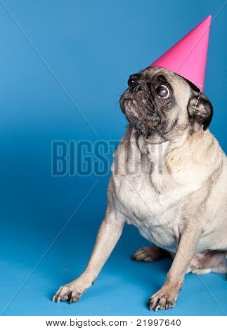 Pug Dog Wearing Party Hat