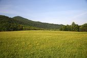 picture of cade  - Cades Cove - JPG