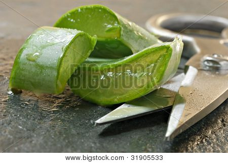 Fresh aloe vera cuttings with scissors on slate cutting board.  Macro with extremely shallow dof.