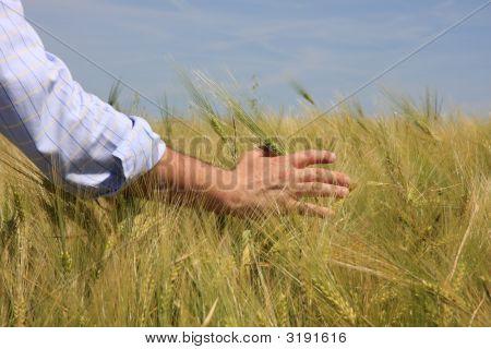 Hand & Wheat