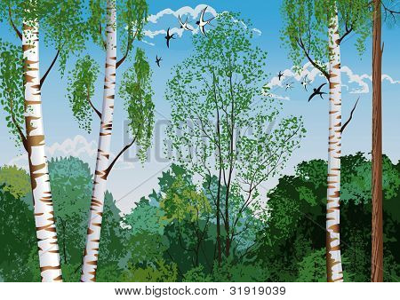 Landscape with trunks of birches and pine tree in the foreground and silhouettes of different trees in the background