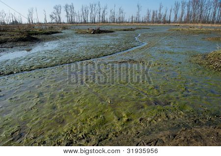 Swamp in Dutch nature at the Biesbosch