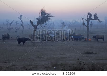 Dawn Over An Indian Livestock Fair