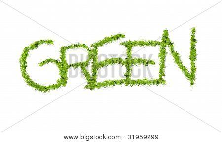 Green Word Grass Texture.jpg