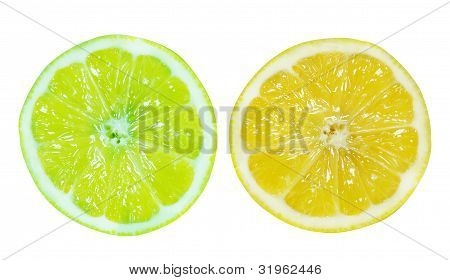 Fresh Slice Of Lemon