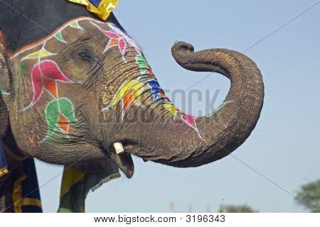 Elephant Salute