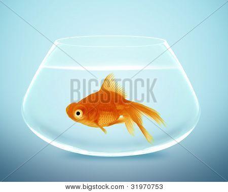 Peixe dourado em uma tigela pequena