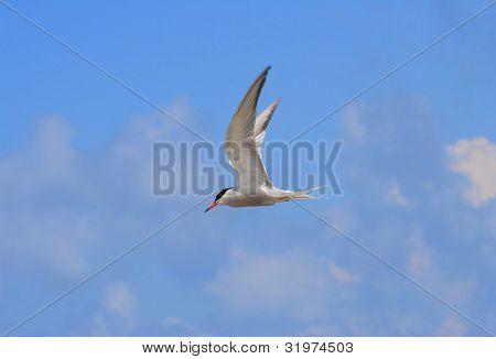 Sea bird flying in a blue sky