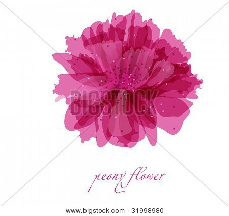 Peony flower on white background. Vector background for your design