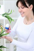 beautiful young woman cultivating flowers in domestic room poster