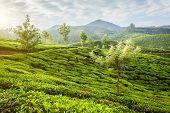 Kerala India travel background - panorama of green tea plantations in Munnar, Kerala, India in the m poster