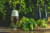 Beer And Hop Plant. Still Life With Beer And Hop Plant In Retro Style. Glass Of Cold Foamy Beer Brow poster