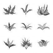 Vector Illustration Of Foliage And Floral Sign. Collection Of Foliage And Summer Stock Symbol For We poster