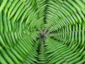 Scenic Closeup Circle Photo Inside The Fern. Green Lush Foliage Photography Background. Round Tropic poster