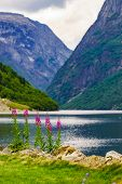 Tourism Vacation And Travel. Beautiful View On Summer Fjord Sognefjord, Gudvangen Norway Scandinavia poster
