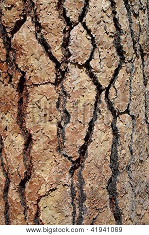 background bark pattern
