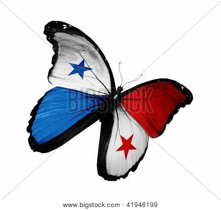Panamanian Flag Butterfly Flying, Isolated On White Background
