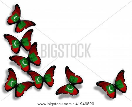 Maldivian Flag Butterflies, Isolated On White Background
