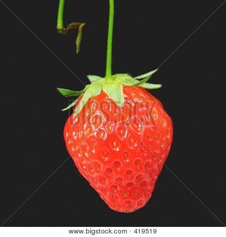 Dickbauchigen Reife Erdbeere