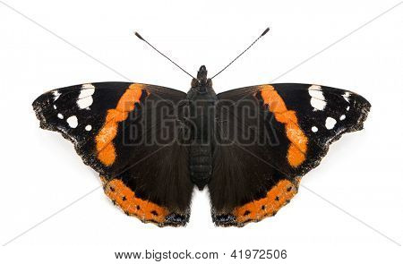 Top view of a Red Admiral butterfly, Vanessa atalanta, against white background