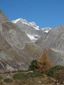 Schinhorn And Yellow Larch
