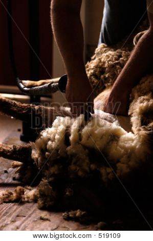 Industry - Sheep Shearing