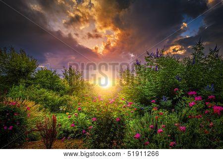Rosegarden Sunrise