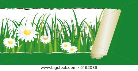 Green Grass With Daisy