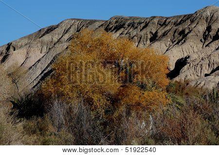 Desert Autumn