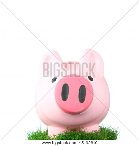Pink Coin Bank Sitting On Grass