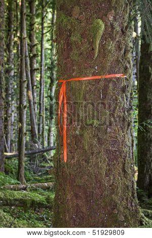 Trail Marker On Tree