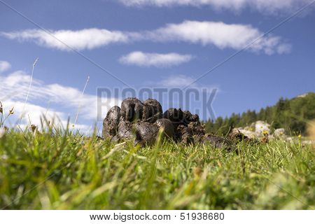 Bioenergy From Cattle Manure; Cow Dung, Grass And Blue Sky