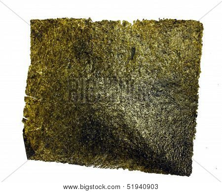 sea weed isolated