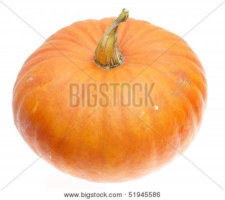 ripe orange pumpkin isolated on white background
