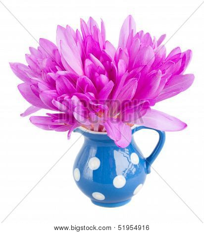 posy of meadow saffron isolated on white