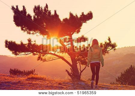 Lonely Tree On Mountain And Woman Walking Alone To Sunset Behind View In Orange And Pink Colors Mela