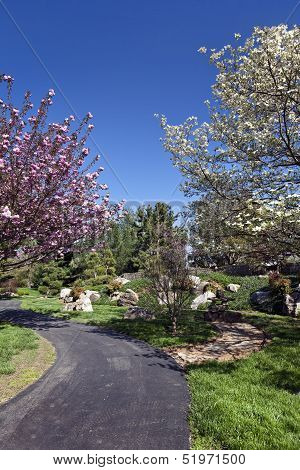 Spring Flowering Trees On A Park Pathway