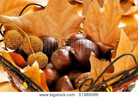 a pile of chestnuts and autumn leaves in a basket